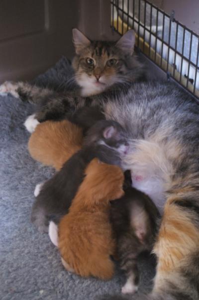 kitten bij mpeder drinkend
