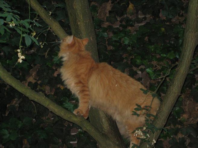 En hij wil hoger de boom in, maar dat is hem tot aan de ramp met de klimop maar twee keer gelukt. De stam is te stijl en er is een gebrek aan stevige takken in de hogere regionen.