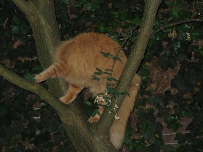 Tygo doet er beter aan weer uit de boom te gaan. Hij moet nog even zoeken wat de beste manier is om zich om te draaien.